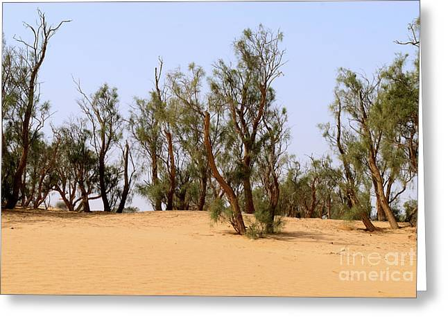 Recently Sold -  - Sanddunes Greeting Cards - Tamarix trees on sand dune  Greeting Card by Dan Yeger