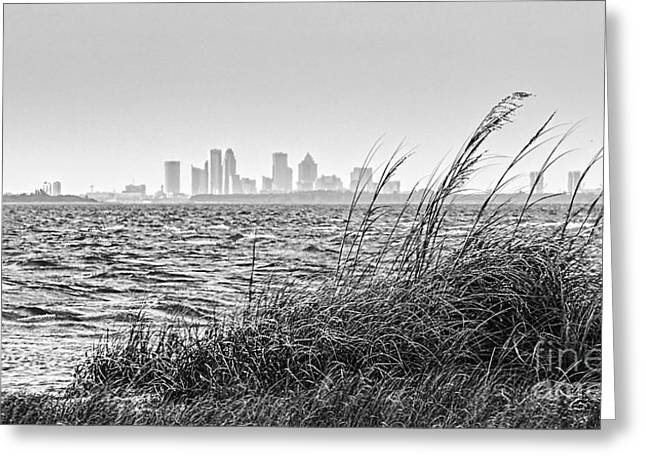 Tampa Greeting Cards - Tampa Across The Bay Greeting Card by Marvin Spates