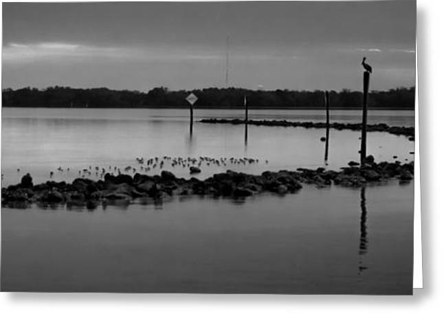 Vacationland Greeting Cards - Tampa Bay Black and White Greeting Card by Along The Trail