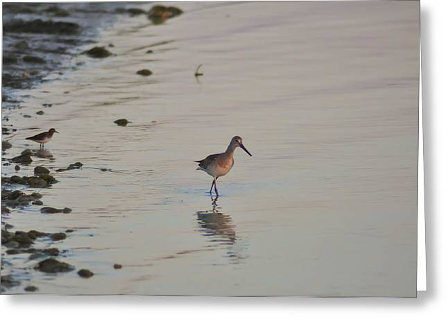 Sand Piper Greeting Cards - Tampa Bay Wildlife Greeting Card by Bill Cannon