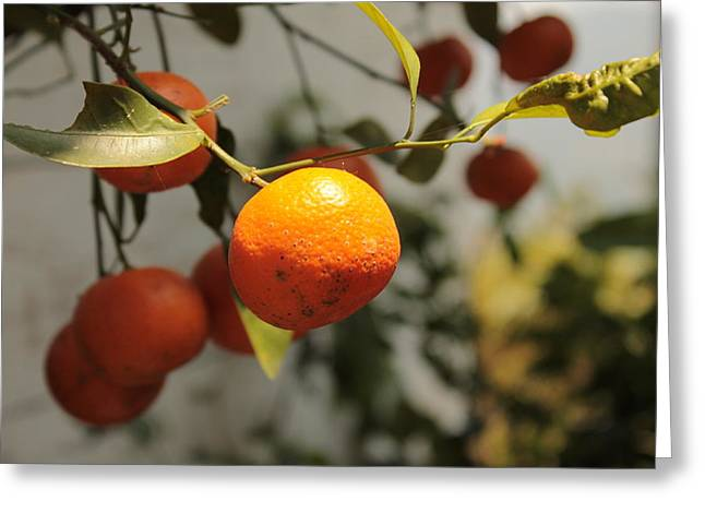 Tangerine Greeting Cards - Tangerine Burst Greeting Card by Abhishek Udaykumar