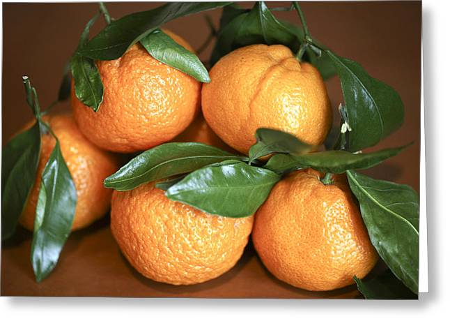 Tangerine Greeting Cards - Tangerines Greeting Card by Michael Riley