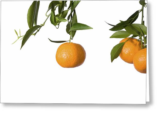 Tangerines On Branch Greeting Card by Anna Kaminska