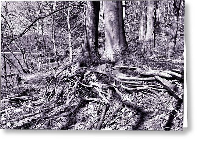 Tree Roots Greeting Cards - Tangled Roots Greeting Card by Michelle Milano