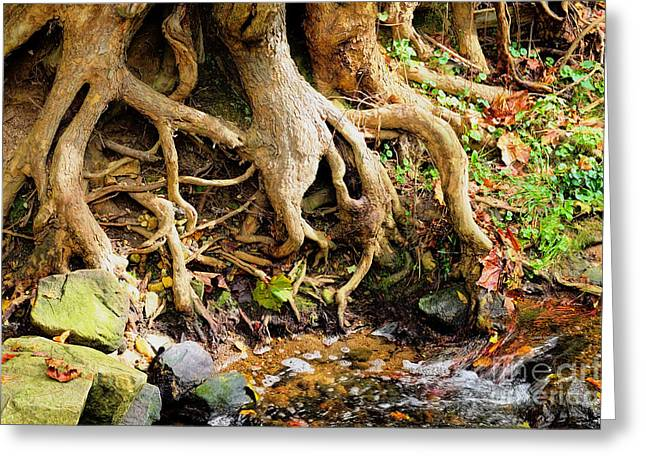 Tree Roots Greeting Cards - Tangled Tree Roots Greeting Card by Ules Barnwell