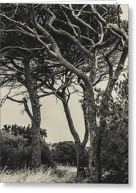 """""""strange Trees"""" Greeting Cards - Tangled Trees Greeting Card by Marco Oliveira"""