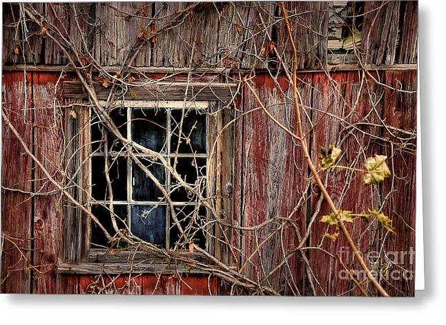 Red Barn In Winter Greeting Cards - Tangled Up In Time Greeting Card by Lois Bryan