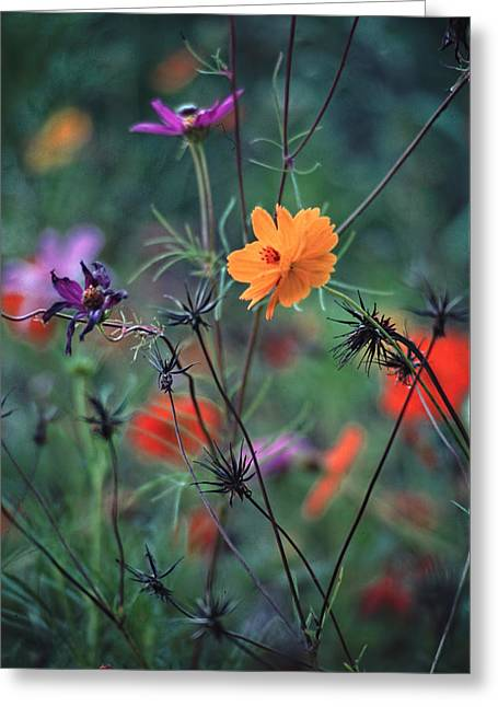 Tangles - A Dance Of Flowers And Weeds Greeting Card by Michael Flood