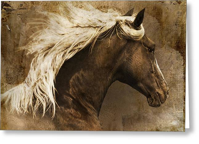 Breeds Greeting Cards - Taos Greeting Card by Priscilla Burgers