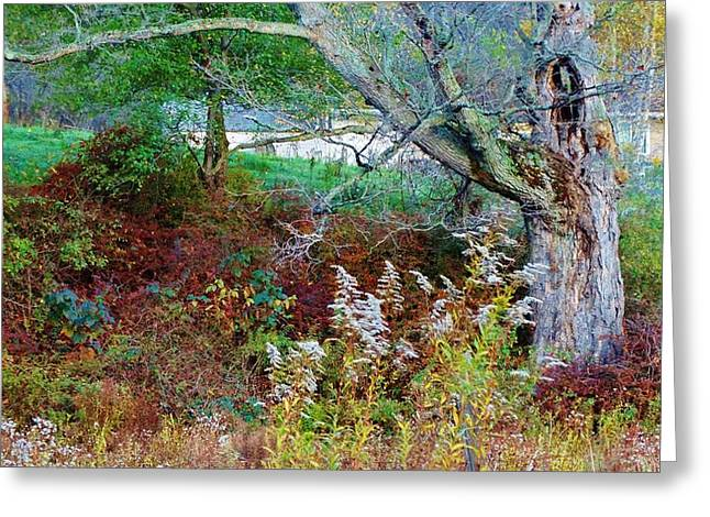 tapestry of colors Greeting Card by Sherry Brant