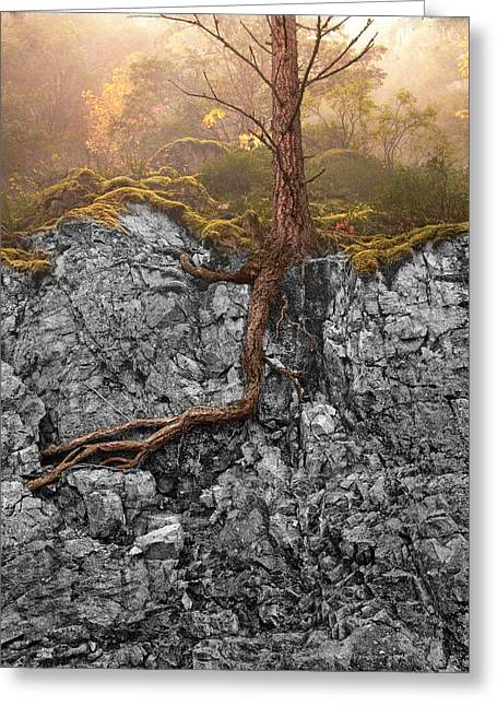 Tree Roots Greeting Cards - Taproot Greeting Card by Mary Jo Allen