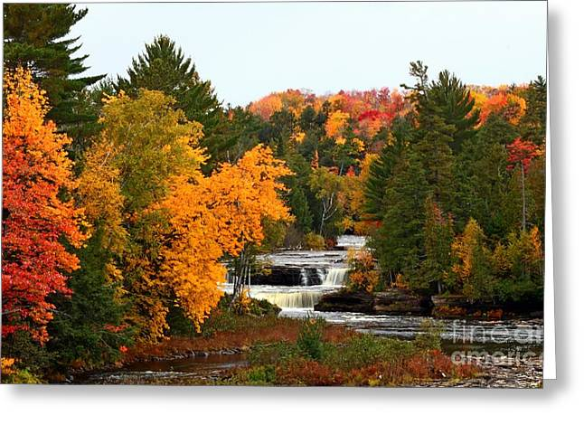 Yellow Leaves Tapestries - Textiles Greeting Cards - Taquamenon Falls Greeting Card by Dipali S