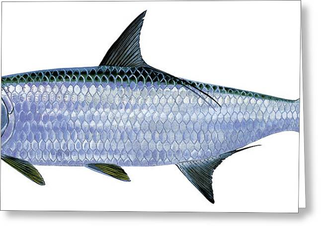 Mackerel Greeting Cards - Tarpon Greeting Card by Carey Chen