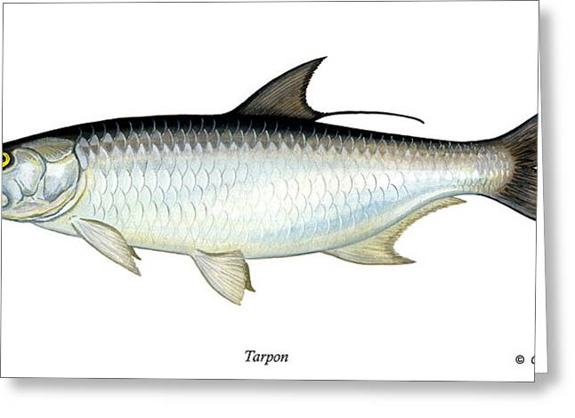 Slam Greeting Cards - Tarpon Greeting Card by Charles Harden