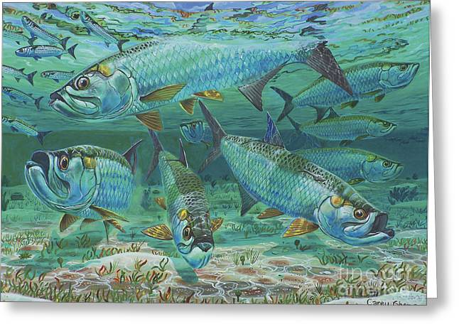 Pez Vela Paintings Greeting Cards - Tarpon rolling In0025 Greeting Card by Carey Chen