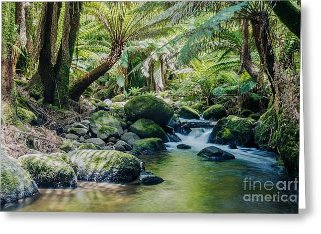 Copyrighted Greeting Cards - Tasmanian rainforest Greeting Card by Matteo Colombo