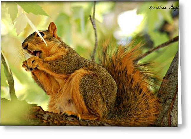 Collects Pyrography Greeting Cards - Tasting Nuts  Greeting Card by Krisztina  Gayler