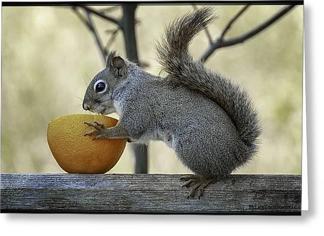 Fruits Greeting Cards - Tasty orange bowl of love Greeting Card by LeeAnn McLaneGoetz McLaneGoetzStudioLLCcom