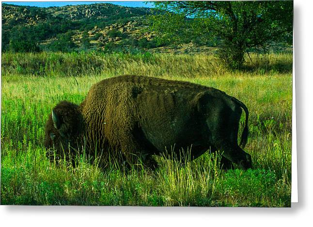 Tatanka Greeting Cards - Tatanka Greeting Card by Alvaro Ramirez