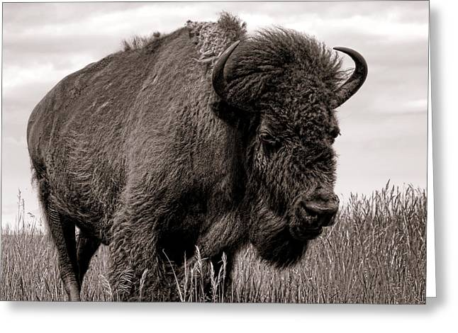 Tatanka Greeting Cards - Tatanka Greeting Card by Olivier Le Queinec