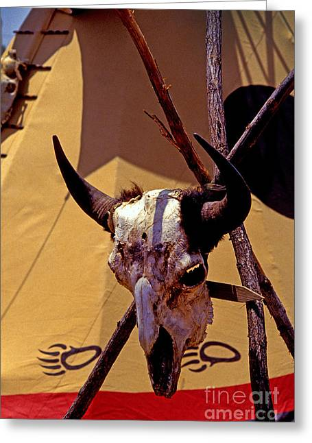 Tatanka Greeting Cards - Tatanka Skull Greeting Card by Paul W Faust -  Impressions of Light