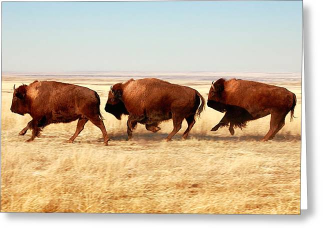 Buffalo Greeting Cards - Tatanka Greeting Card by Todd Klassy