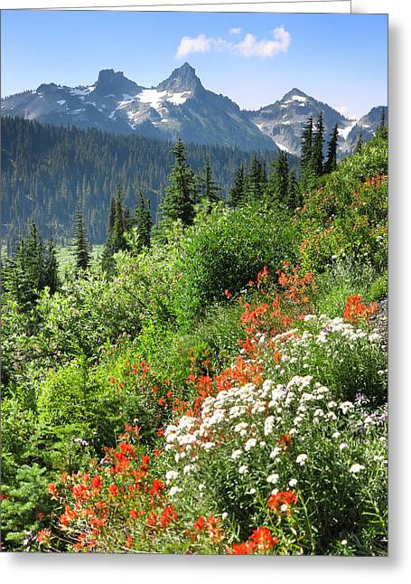 Wildflower Photography Greeting Cards - Tatoosh Mountain Range Greeting Card by King Wu
