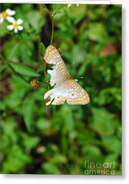 Inspirational Wildlife Prints Greeting Cards - Tattered but Undefeated Greeting Card by Lilian Norris