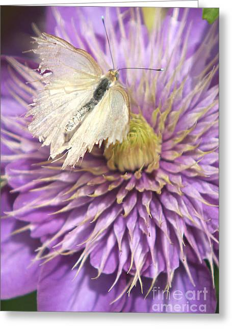 Blooms Greeting Cards - Tattered Wings Greeting Card by CJ McKendry