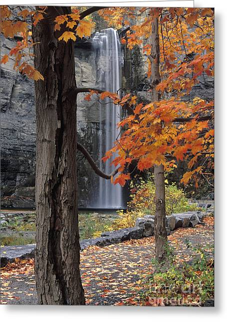 Tompkins County Greeting Cards - Taughannock Falls - FS000402 Greeting Card by Daniel Dempster