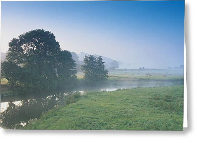 Tree Lines Greeting Cards - Taw River Near Barnstaple N Devon Greeting Card by Panoramic Images