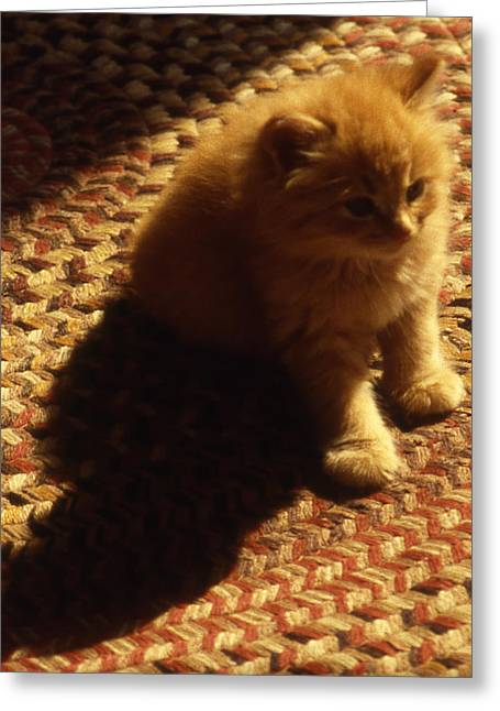 Pictures Of Cats Greeting Cards - Tawney Kitten Greeting Card by Skip Willits