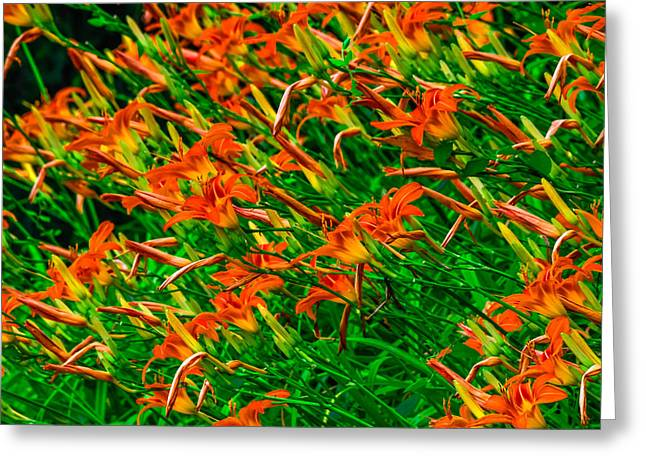 Abloom Greeting Cards - Tawny Daylilies Greeting Card by Brian Stevens