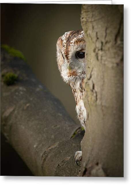 Animal Wisdom Greeting Cards - Tawny Owl Greeting Card by Andy Astbury