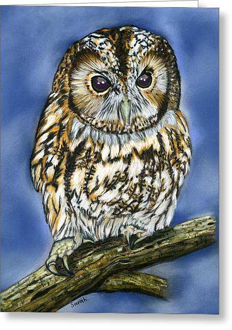 Bird Of Prey Greeting Card Greeting Cards - Tawny Owl Greeting Card by Sarah Dowson