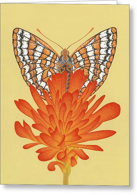 Butterflies Paintings Greeting Cards - Taylors Checkerspot  Greeting Card by Nathan Marcy