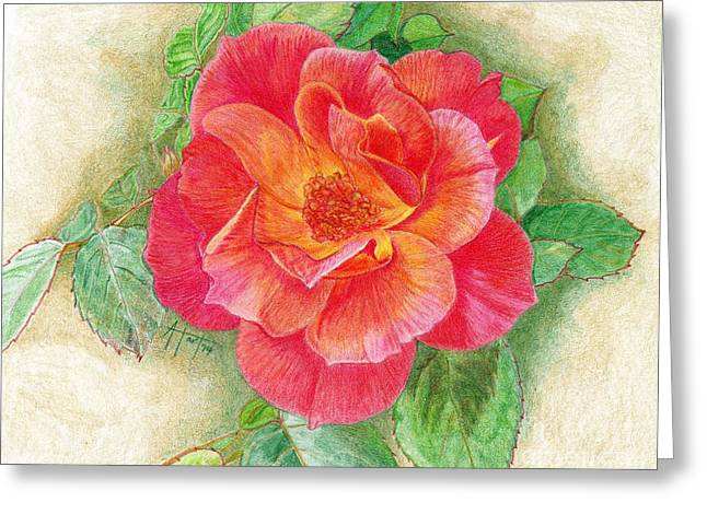 Nature Center Drawings Greeting Cards - Tea Rose Greeting Card by Audrey Van Tassell