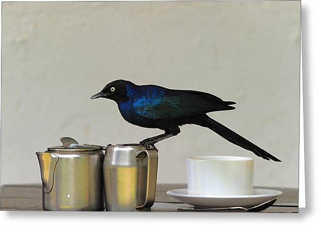 Starlings Greeting Cards - Tea Time in Kenya Greeting Card by Tony Beck