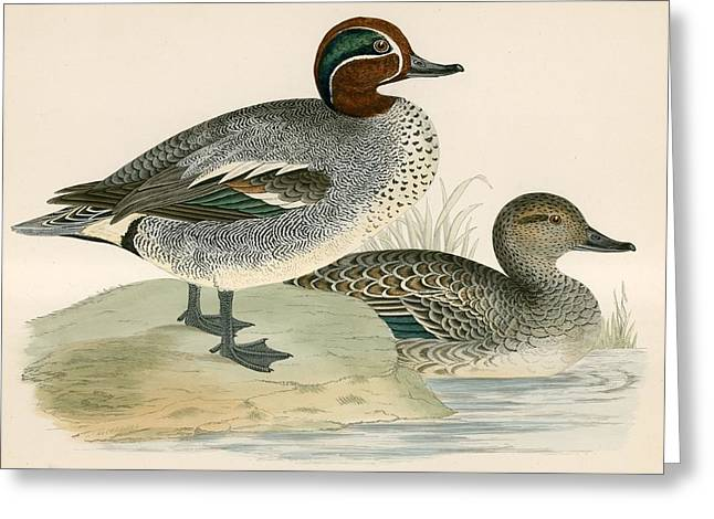 Hunting Bird Greeting Cards - Teal Greeting Card by Beverley R. Morris