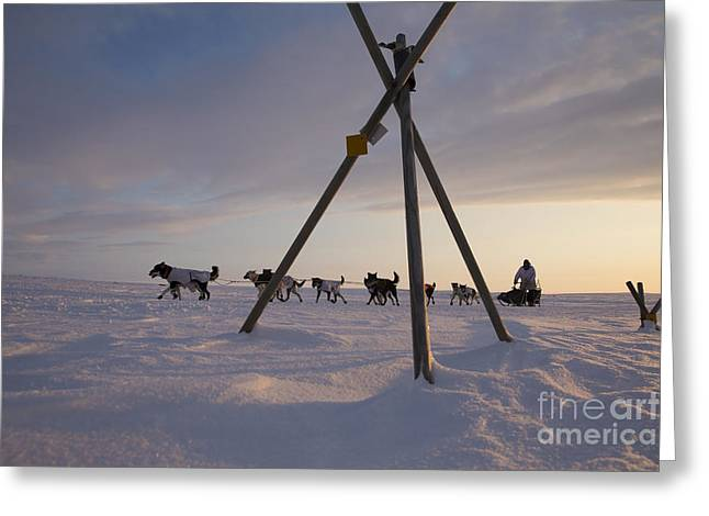 Husky Greeting Cards - Team passing trail marker Greeting Card by Jeff Schultz