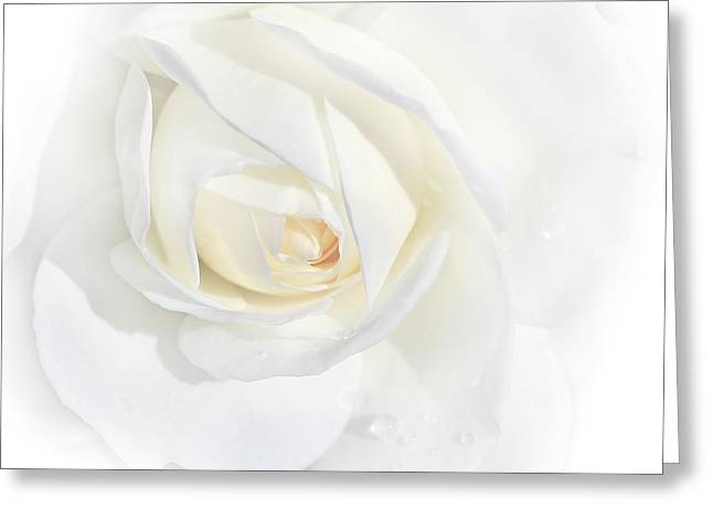 Ivory Flower Greeting Cards - Tears White Rose Flower Greeting Card by Jennie Marie Schell