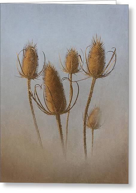 Wildlife Refuge. Greeting Cards - Teasel Greeting Card by Angie Vogel