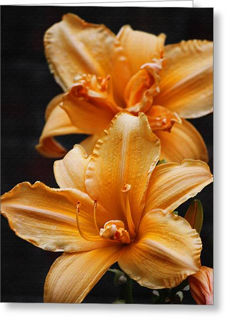 Photograph Of Peaches Greeting Cards - Technicoor Dreamcoat Daylily in Pastel Greeting Card by Suzanne Gaff