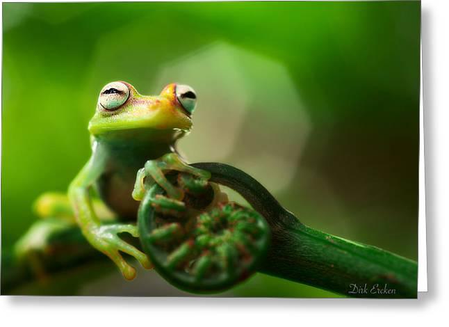 Tree Frog Photographs Greeting Cards - tree frog Hypsiboas punctatus Greeting Card by Dirk Ercken