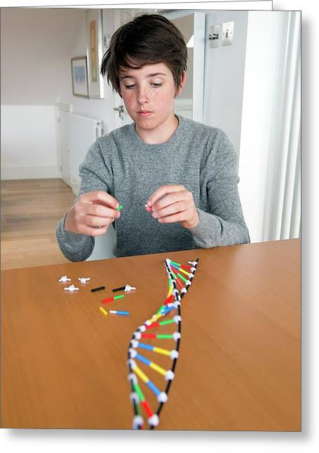 Teenager Building Dna Model Greeting Card by Lawrence Lawry