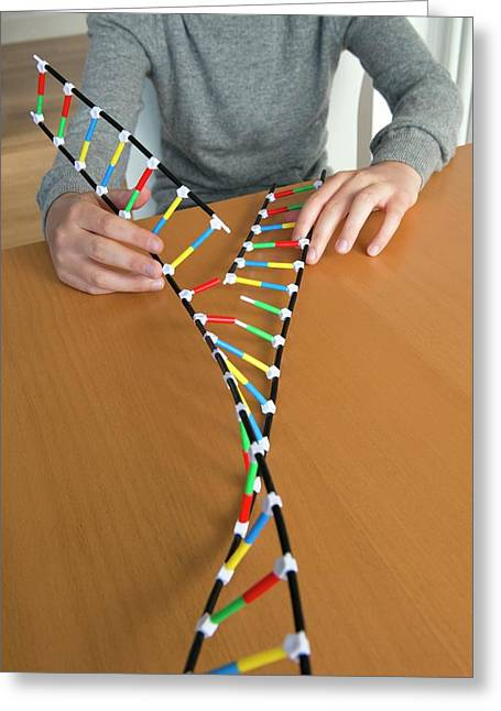Teenager Demonstrating Dna Replication Greeting Card by Lawrence Lawry