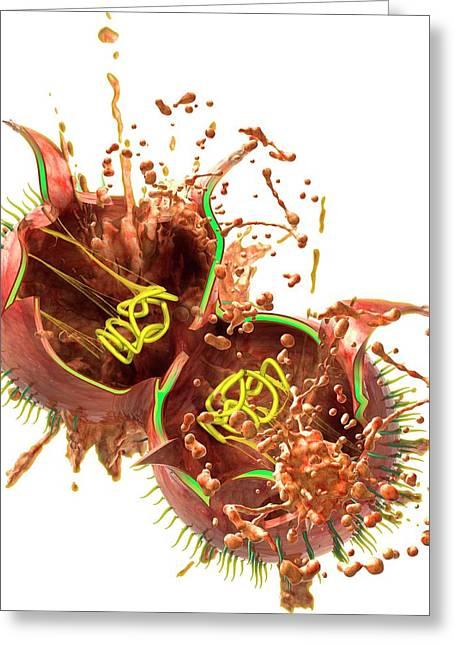 Teixobactin Destroying Bacterium Greeting Card by Claus Lunau