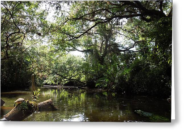 Telegraph Creek Alva Florida Greeting Card by Joseph G Holland