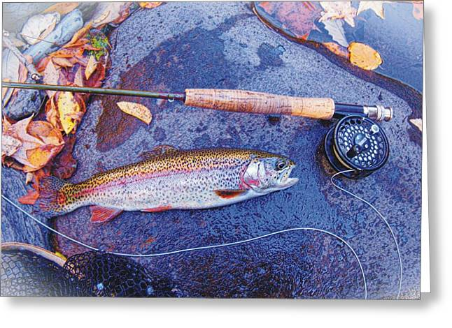 Rainbow Trout Greeting Cards - Tellico River Rainbow Greeting Card by Joe Duket
