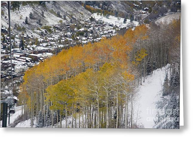 Colorado Greeting Cards - Telluride Aspens Greeting Card by Tim Mulina